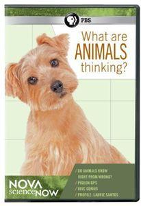 Nova Sciencenow: What Are Animals Thinking?