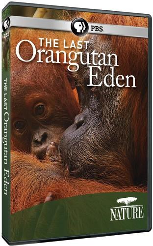 The Last Orangutan Eden