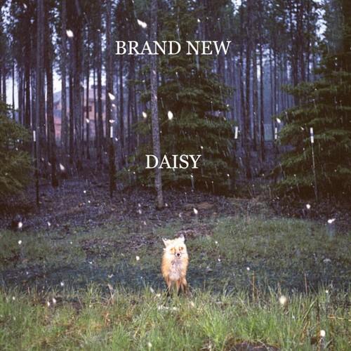 Brand New-Daisy