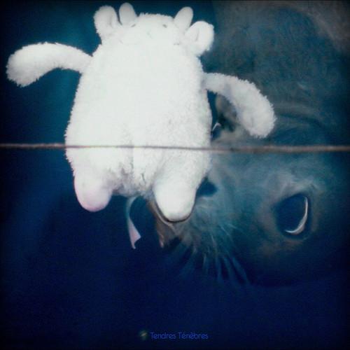 Tendres Tenebres /  Various
