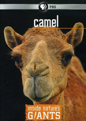 Inside Nature's Giants: Camel