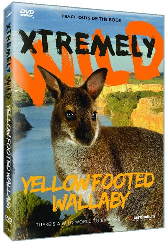 Yellow Footed Wallaby