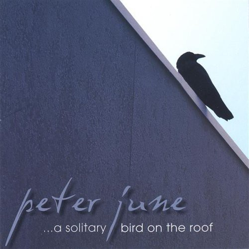 Solitary Bird on the Roof