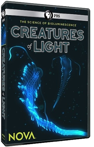 Nova: Creatures of Light