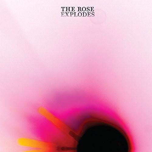 Rose Explodes