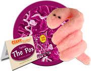 Pox - Syphilis: Treponema Pallidum (Giant Microbes)|