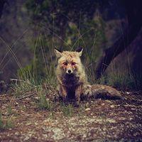 Winterpills - Love Songs [LP]