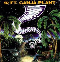 10 Ft. Ganja Plant - Hillside Airstrip