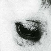 Creepoid - Horse Heaven