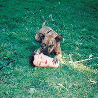 Joyce Manor - Cody [Vinyl]