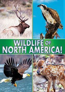 Wildlife of North America