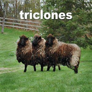 Triclones