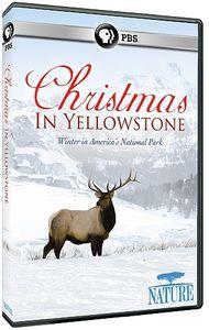 Nature: Christmas in Yellowstone
