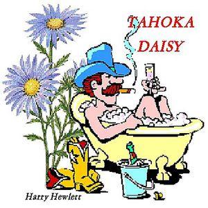 Tahoka Daisy
