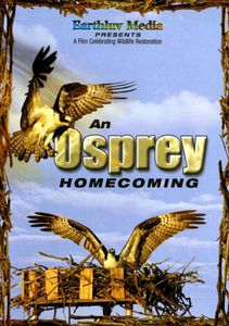 An Osprey Homecoming