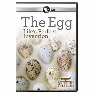 Nature: The Egg: Life's Perfect Invention