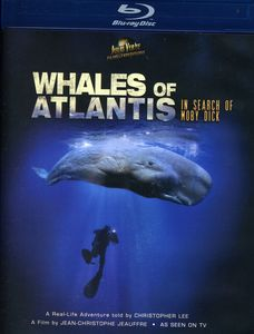 Whales of Atlantis: In Search of