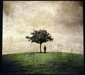 Burial Tree 2