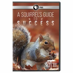 Nature: A Squirrel's Guide To Success