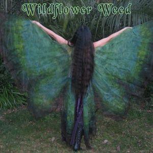 Wildflower Weed
