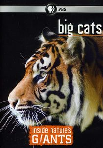 Inside NatureS Giants: Big Cats