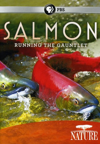 Nature: Salmon