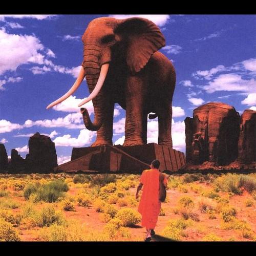 Morning Elephant
