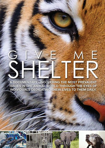 - Give Me Shelter / (Ws)