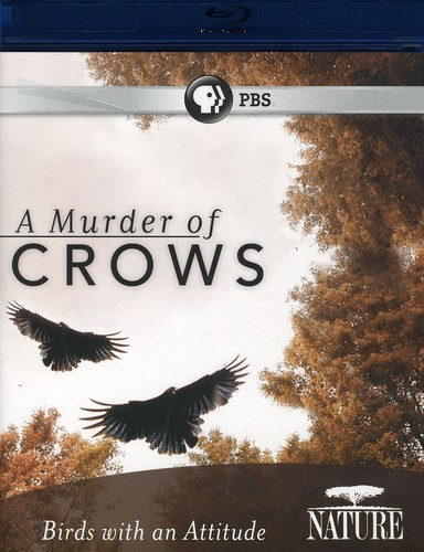 Nature: A Murder of Crows